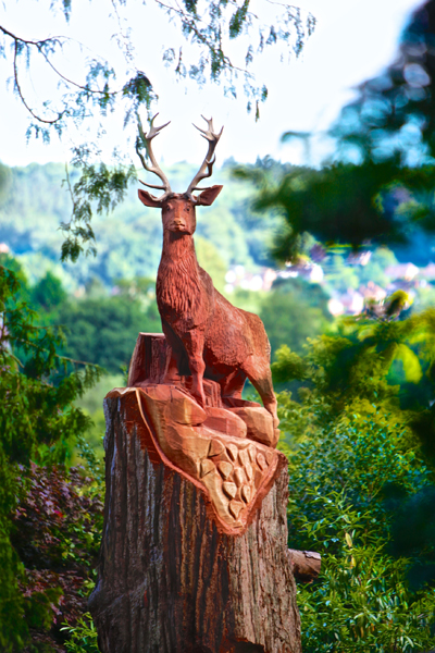 Gary orange wood carving breathing new life into wood